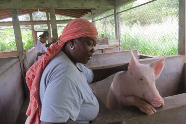 Agriculture in St. Kitts moving in the right direction