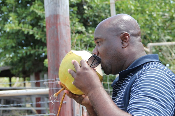Nevis making strides in revitalising its coconut industry