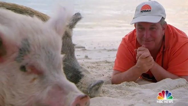Bahamas' swimming pigs star on NBC's Today Show