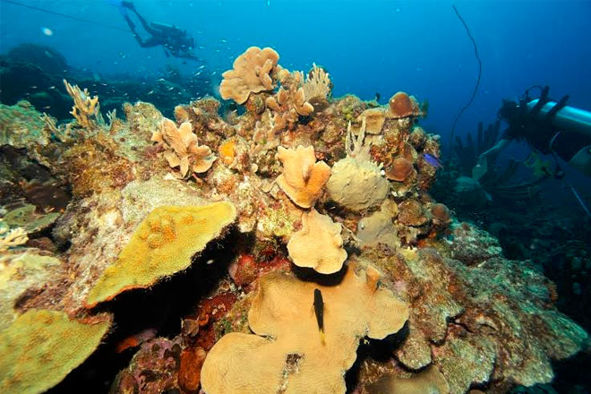 Coral reef tourism in danger as reefs struggle to adapt to warming