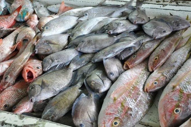 Fish stocks at risk as sea food lovers dig in