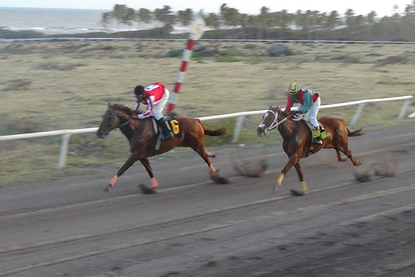 Patrick Howell and Wild Candy take Tourism Gold Cup