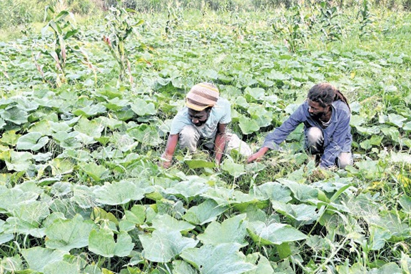 IICA urges regional farmers to adopt practices to combat climate change