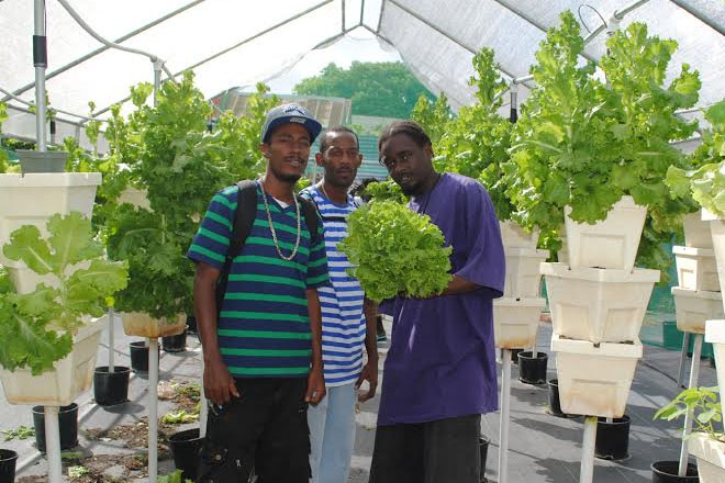 PEP supports McKnight youths' hydroponics venture
