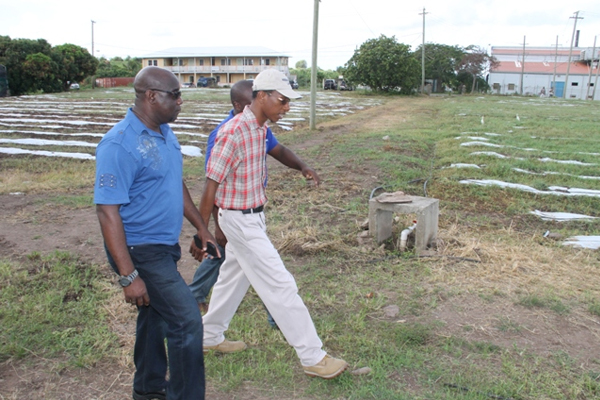 New green house; changing rooms for two government-owned farms on Nevis