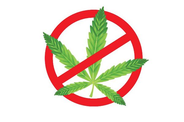 Grenada not in favour of decriminalising marijuana