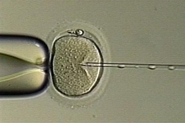 Utah university investigates suspected sperm switch