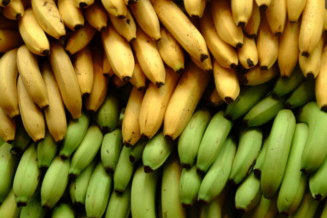 St Vincent and the Grenadines plans agricultural diversification