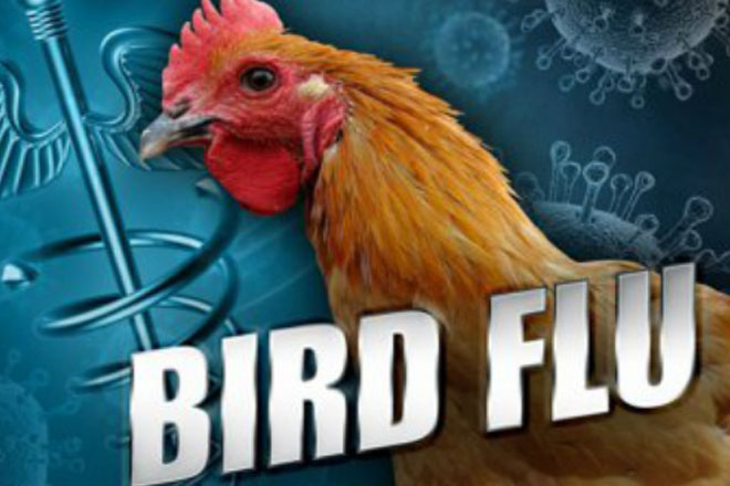 Bird flu's economic impact above $300M in Minnesota