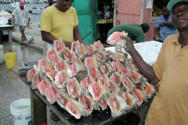 CARICOM, US discuss threat of lawsuit over queen conch