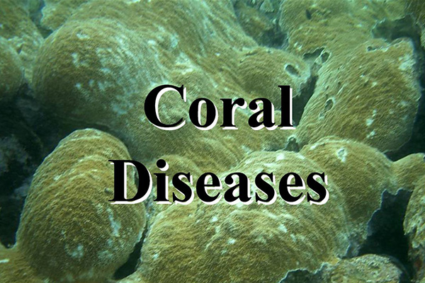 UVI Researchers ID virus as possible cause of White Plague Coral Disease