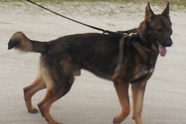 Police to expand its K-9 Unit