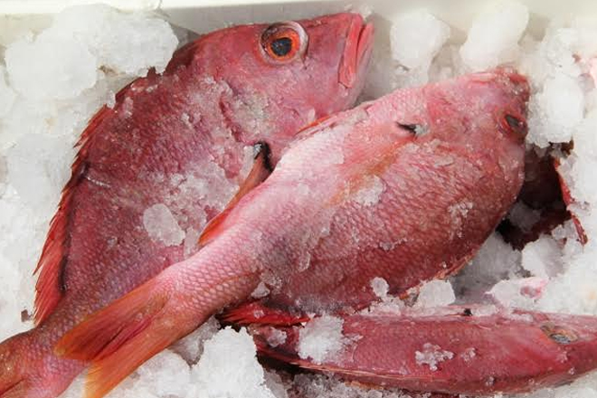 New regulations afoot for Nevis travellers leaving RLB International with frozen fish