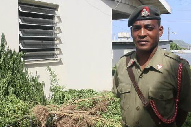 Thousands of Marijuana Plants Seized in Joint Operation