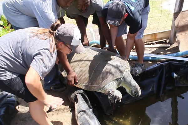 Progress For Turtle Monitoring Plans