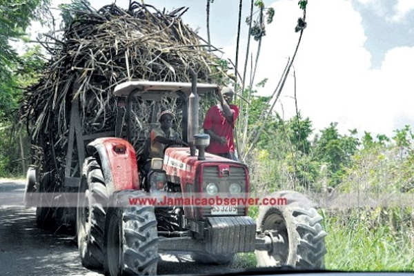 Barbados gov't moving to export sugar to regional countries