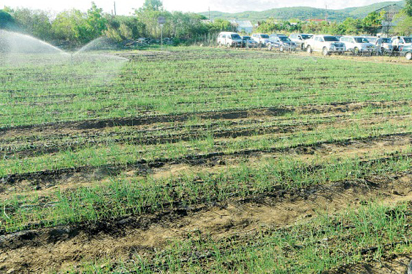 Irrigation system installed at Yallahs Agro-Park