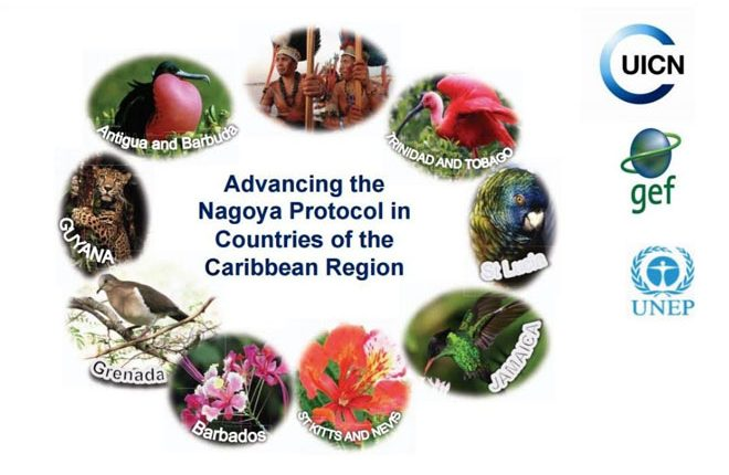 Stakeholders meet in St. Kitts to convene regional workshop on the Nagoya Protocol