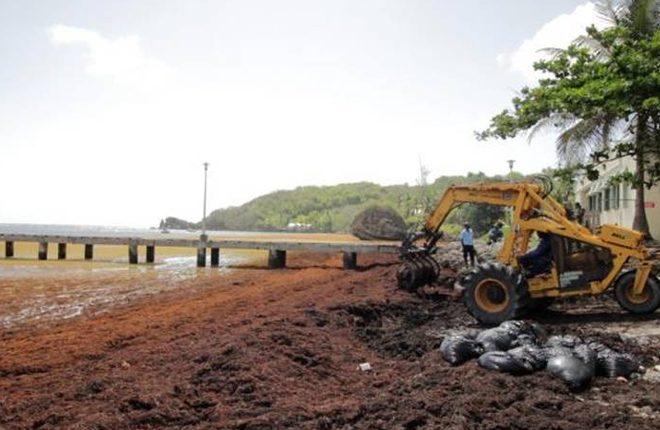 Barbados battles sargassum seaweed through innovation