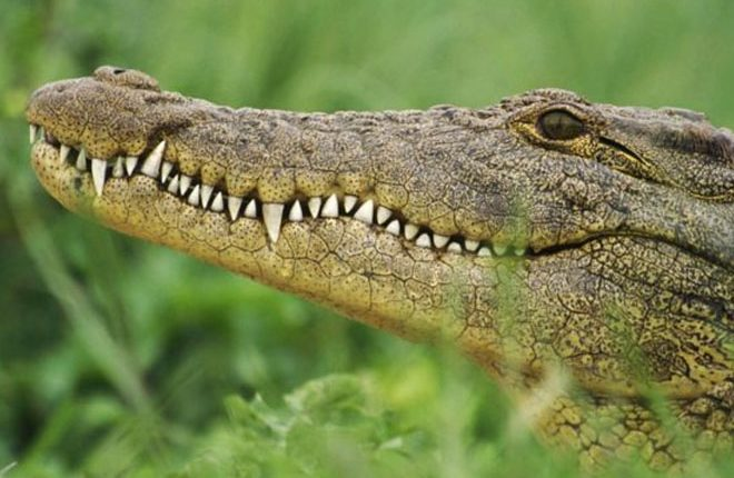 Crocodile kills Ethiopian pastor during lake baptism