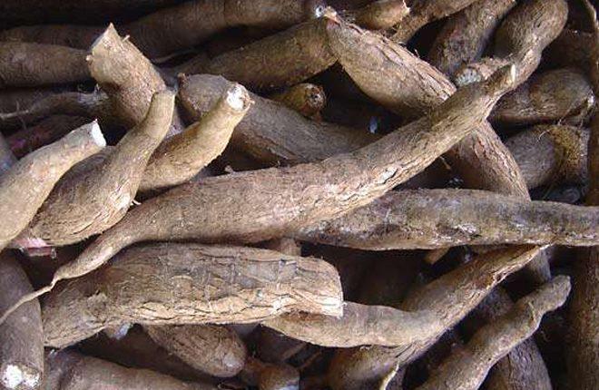 Cassava Workshop